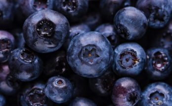 Benefits of Blueberries for the Brain